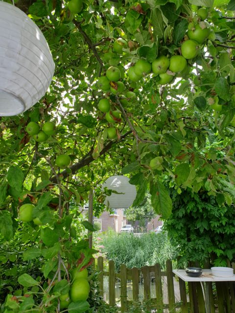 apples in our tree